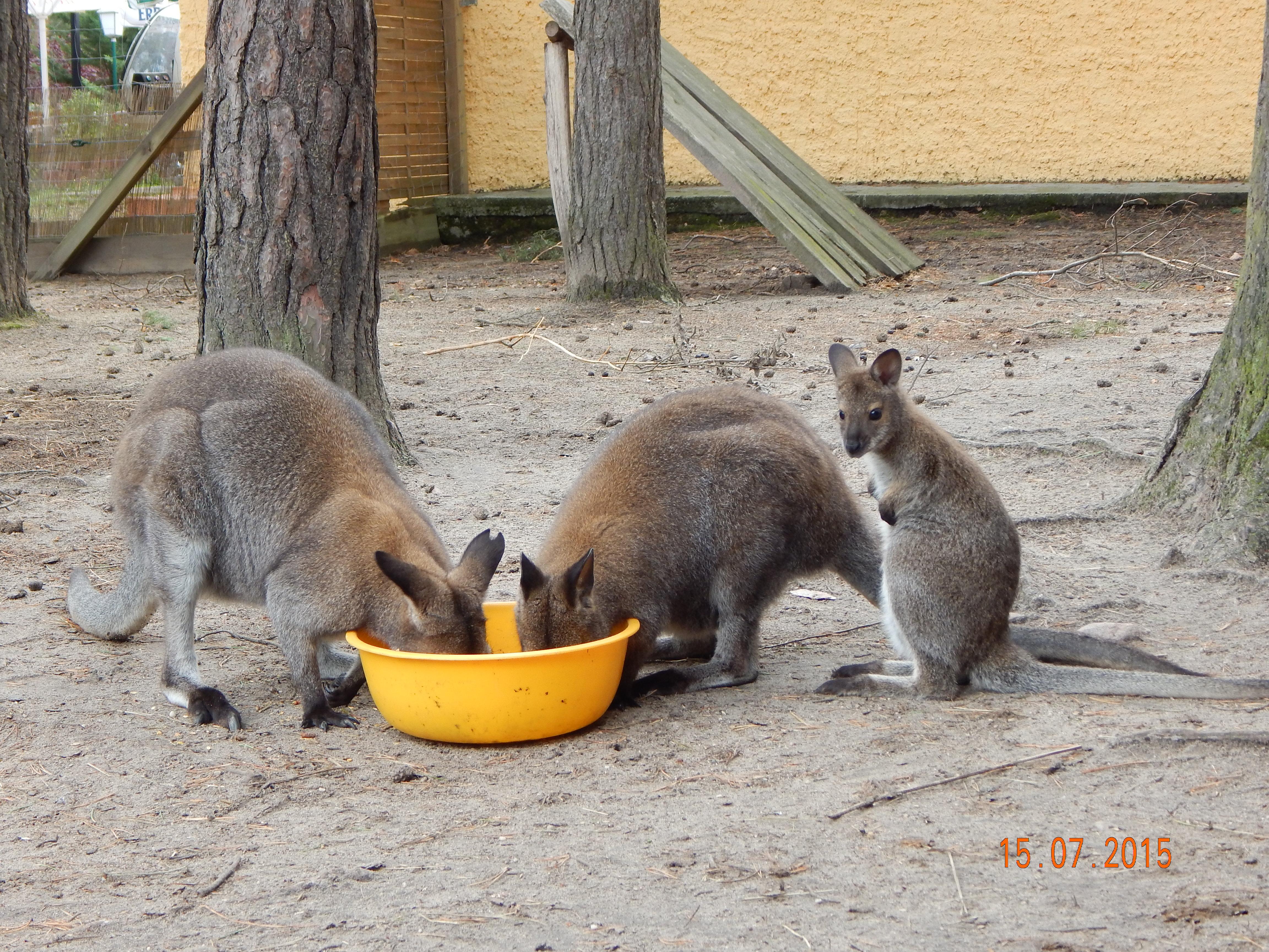 Jack und Jill beim Frühstück. Das Kleine überlegt wohl was das soll ...?!?