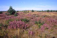 Lieberoser Heide
